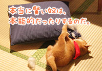 マメシバ一郎フーテンの芝二郎名言11