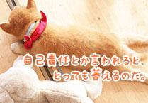 マメシバ一郎フーテンの芝二郎名言12