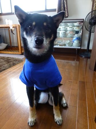 犬屋Tシャツ7