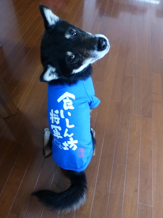犬屋Tシャツ9