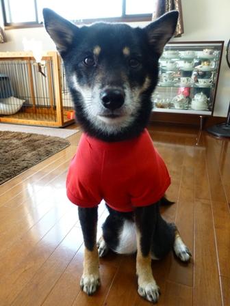 犬屋Tシャツ15