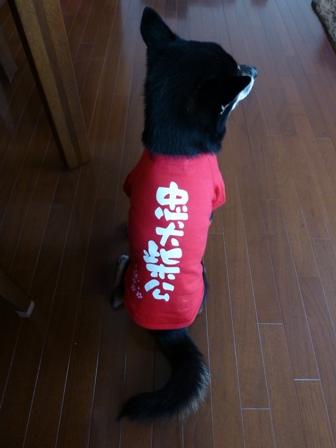 犬屋Tシャツ16