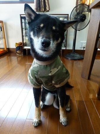 犬屋Tシャツ20