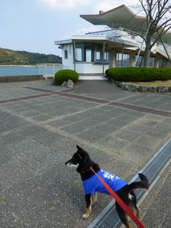 ミキモト真珠島6