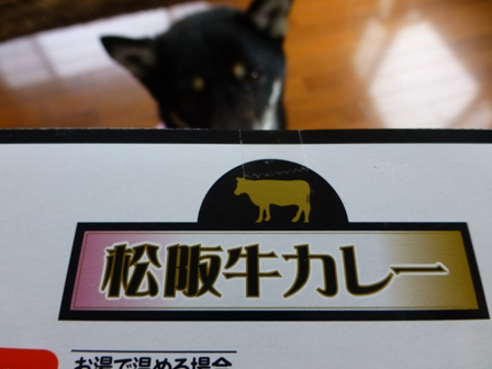 松阪牛カレー2