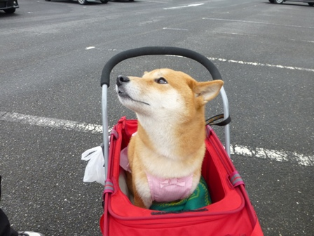 忍者犬変身3
