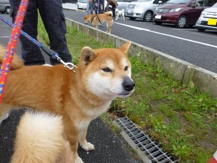 忍者犬変身4