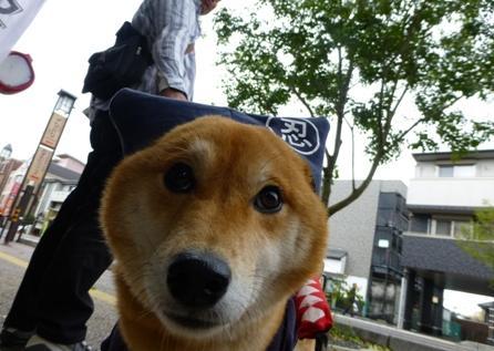 忍者犬変身18