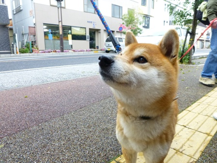 忍者犬変身20