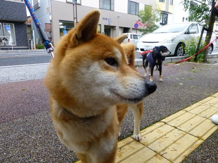 忍者犬変身21