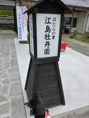 江島牡丹園2
