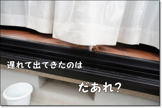 DSC03501.jpg