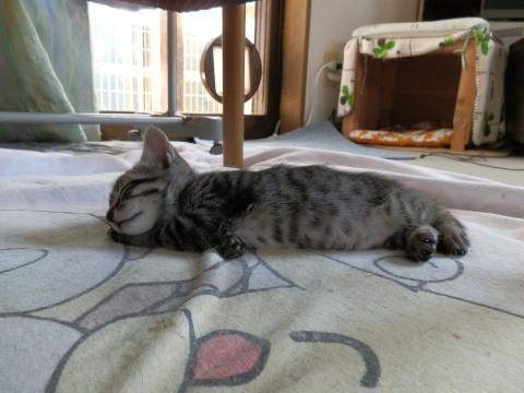 ちびちび ホットマットで寝る