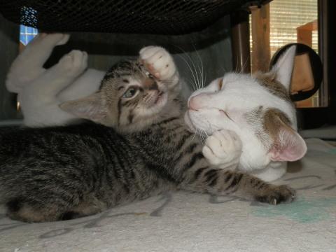 テンテン 子猫2