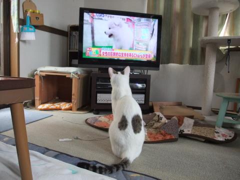 テンテン テレビ見る