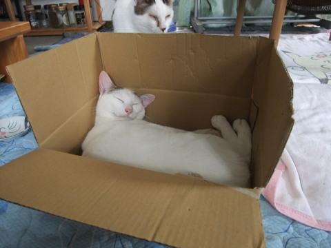 テンテン この箱は…