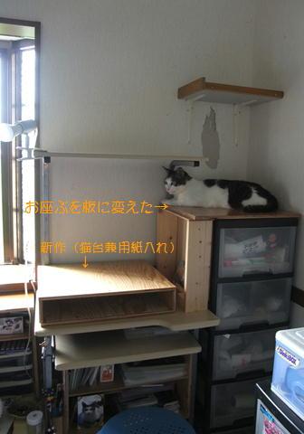 ニュー猫台