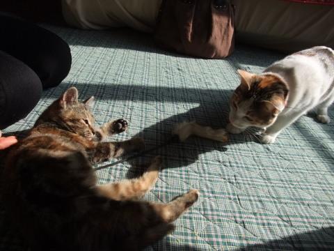 くーちゃんと子猫