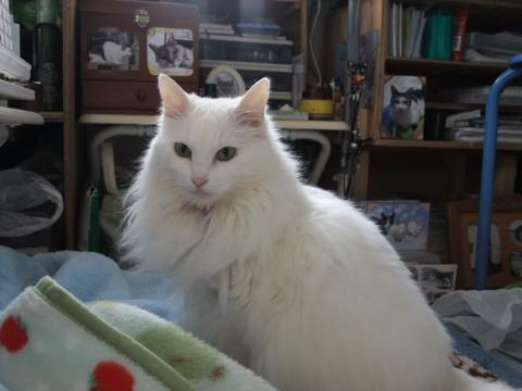セーラ 美猫~