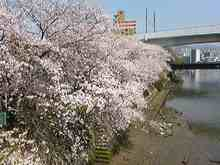 +++ りり☆Blog evolution +++ 広島在住OLの何かやらかしてる日記(・ω・)-DVC00219.jpg