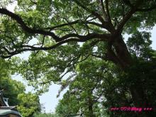 +++ りり☆Blog evolution +++ 広島在住OLの何かやらかしてる日記(・ω・)-20090504_076.jpg