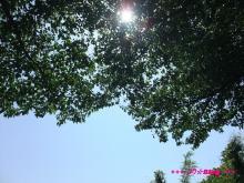 +++ りり☆Blog evolution +++ 広島在住OLの何かやらかしてる日記(・ω・)-20090510_012.jpg
