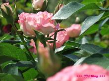+++ りり☆Blog evolution +++ 広島在住OLの何かやらかしてる日記(・ω・)-20090510_059.jpg