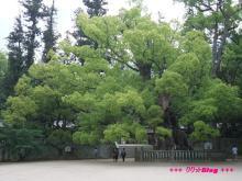 +++ りり☆Blog evolution +++ 広島在住OLの何かやらかしてる日記(・ω・)-20090524_119.jpg