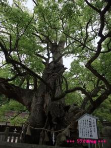 +++ りり☆Blog evolution +++ 広島在住OLの何かやらかしてる日記(・ω・)-20090524_125.jpg