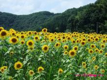 +++ りり☆Blog evolution +++ 広島在住OLの何かやらかしてる日記(・ω・)-20090802_054.jpg