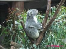 +++ りり☆Blog evolution +++ 広島在住OLの何かやらかしてる日記(・ω・)-20090922_036.jpg