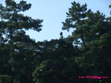 +++ りり☆Blog evolution +++ 広島在住OLの何かやらかしてる日記(・ω・)-20091012_029.jpg