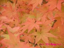 +++ りり☆Blog evolution +++ 広島在住OLの何かやらかしてる日記(・ω・)-20091025_001.jpg