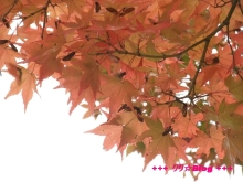 +++ りり☆Blog evolution +++ 広島在住OLの何かやらかしてる日記(・ω・)-20091025_002.jpg