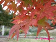+++ りり☆Blog evolution +++ 広島在住OLの何かやらかしてる日記(・ω・)-20091025_003.jpg