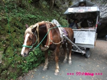 +++ りり☆Blog evolution +++ 広島在住OLの何かやらかしてる日記(・ω・)-20091025_208.jpg