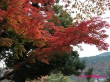 +++ りり☆Blog evolution +++ 広島在住OLの何かやらかしてる日記(・ω・)-20091115_023.jpg