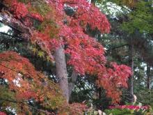 +++ りり☆Blog evolution +++ 広島在住OLの何かやらかしてる日記(・ω・)-20091115_027.jpg