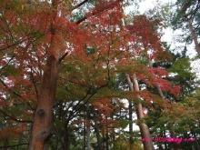 +++ りり☆Blog evolution +++ 広島在住OLの何かやらかしてる日記(・ω・)-20091115_028.jpg