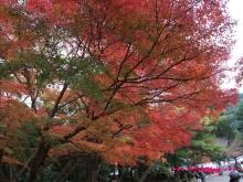 +++ りり☆Blog evolution +++ 広島在住OLの何かやらかしてる日記(・ω・)-20091115_040.jpg