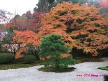 +++ りり☆Blog evolution +++ 広島在住OLの何かやらかしてる日記(・ω・)-20091115_045.jpg