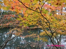 +++ りり☆Blog evolution +++ 広島在住OLの何かやらかしてる日記(・ω・)-20091115_050.jpg