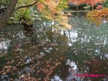 +++ りり☆Blog evolution +++ 広島在住OLの何かやらかしてる日記(・ω・)-20091115_051.jpg