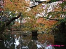 +++ りり☆Blog evolution +++ 広島在住OLの何かやらかしてる日記(・ω・)-20091115_055.jpg
