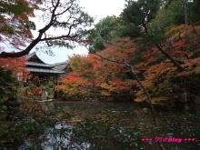 +++ りり☆Blog evolution +++ 広島在住OLの何かやらかしてる日記(・ω・)-20091115_056.jpg