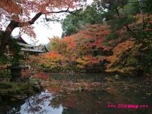 +++ りり☆Blog evolution +++ 広島在住OLの何かやらかしてる日記(・ω・)-20091115_059.jpg