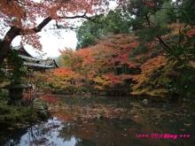 +++ りり☆Blog evolution +++ 広島在住OLの何かやらかしてる日記(・ω・)-20091115_060.jpg