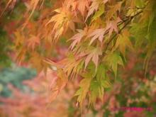 +++ りり☆Blog evolution +++ 広島在住OLの何かやらかしてる日記(・ω・)-20091115_098.jpg