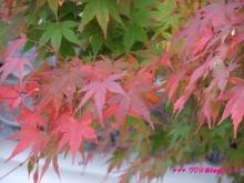 +++ りり☆Blog evolution +++ 広島在住OLの何かやらかしてる日記(・ω・)-20091115_101.jpg