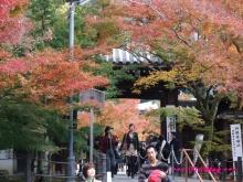 +++ りり☆Blog evolution +++ 広島在住OLの何かやらかしてる日記(・ω・)-20091115_102.jpg